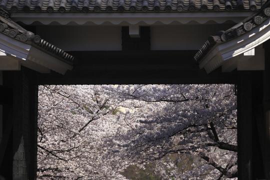 春の記憶-001.jpg